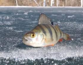 Как поймать в реке рыбу фото