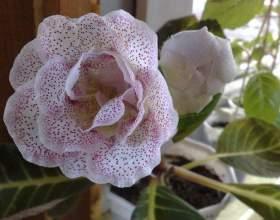 Как поливать цветущие растения летом фото