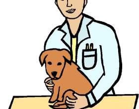 Как получить ветеринарную лицензию фото