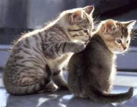 Как примирить котов фото