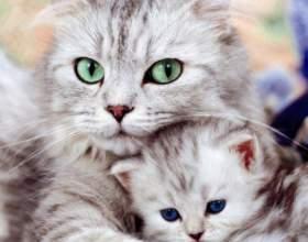 Как понять, что кошка забеременела фото