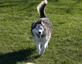 Как определить, что у собаки течка фото