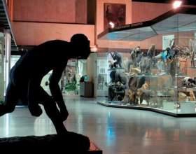 Как попасть в музей бесплатно фото