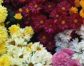 Как посадить цветы на даче фото