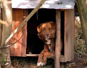 Как построить будку для собаки фото