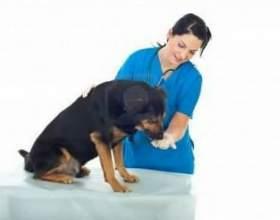 Как дать лекарство собаке фото