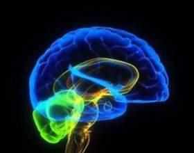 Как повысить работоспособность мозга фото