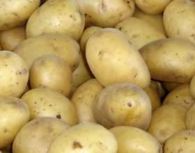 Как повысить урожайность картофеля фото