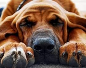 Как правильно подстригать ногти у собак фото