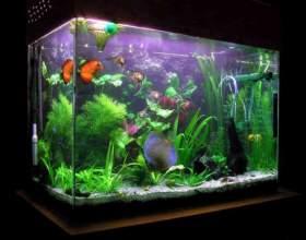 Как правильно установить аквариум фото