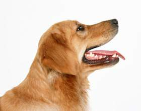 Как предотвратить нападение чужой собаки фото