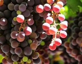 Как приготовить горячее вино от простуды фото