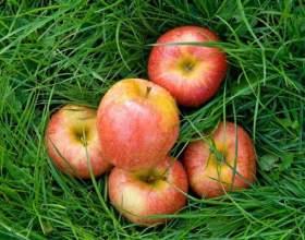 Как приготовить яблочное вино фото