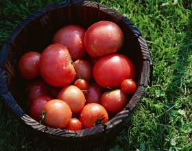 Как приготовить помидоры на зиму фото