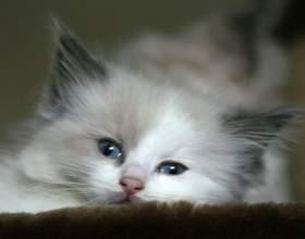 Как прикармливать котят фото