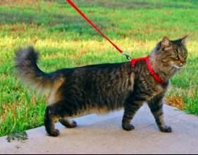 Как приучить кота гулять на улице фото