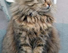 Как приручить кошку к рукам фото
