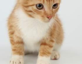 Как приручить котёнка к туалету фото
