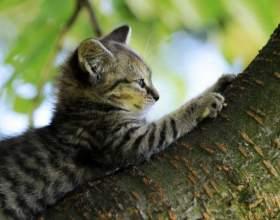 Как приручить кота точить когти фото
