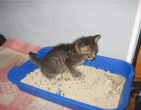 Как приручить котенка к лотку фото