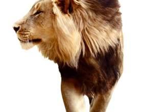Как приручить мужчину-льва фото