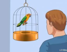 Как приручить птицу фото