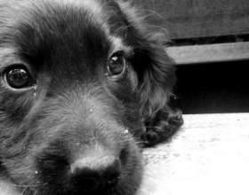 Как пристроить собаку фото