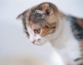 Как приучить котёнка есть корм фото