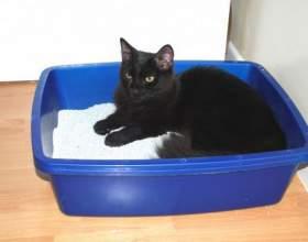 Как приучить кошку к лотку фото