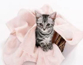 Как приучить кота ходить в лоток фото