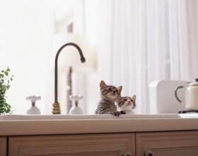 Как приучить кота к воде фото
