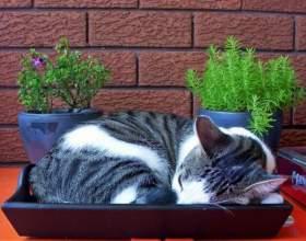 Как приучить котенка быть послушным фото