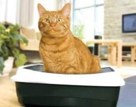Как приучить котенка к лотку быстро фото
