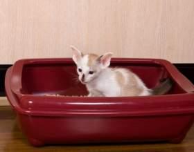 Как приучить котенка к туалету фото