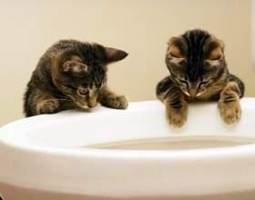 Как приучить котенка к унитазу фото