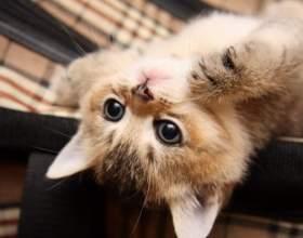 Как приучить котенка пить фото