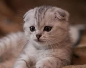 Как научить котенка есть и пить фото