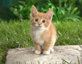 Как придумать котенку забавную кличку фото