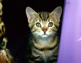 Как приучить котёнка к унитазу фото