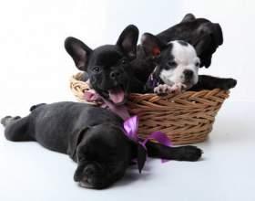 Как приучить щенка ходить на пеленку фото