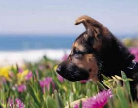 Как приучить щенка ходить на улицу фото