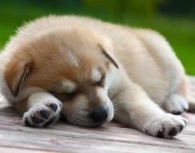 Как приучить щенка ночью спать фото
