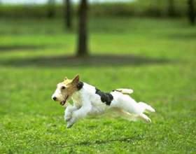 Как приучить собаку к кличке фото