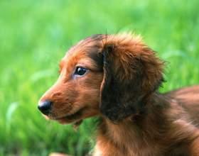 Как приучить собаку ходить на улице фото