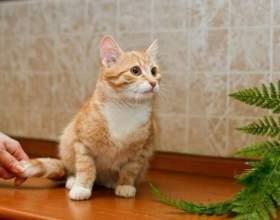 Как привить чистоплотность котенку фото