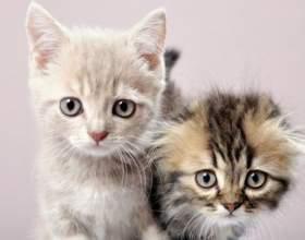 Как привить котенку хорошие манеры фото