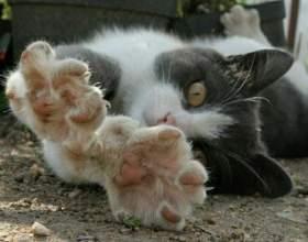 Как проходит процедура удаления когтей у кошки фото