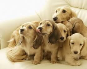 Как проходят роды у собак фото