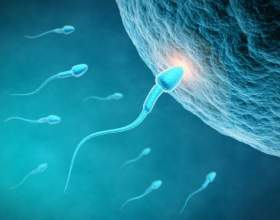 Как происходит оплодотворение яйцеклетки фото