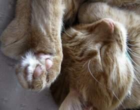 Как проявляется аллергия на кошку фото